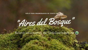 Aires del Bosque